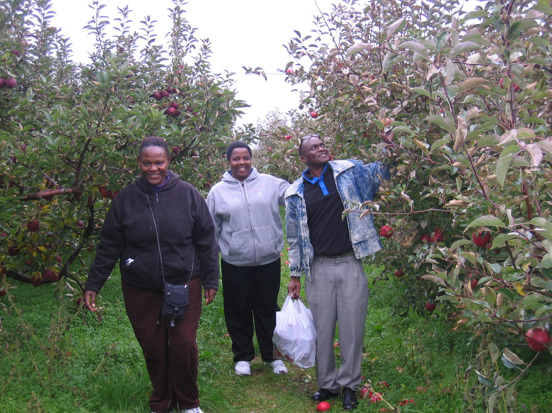 Fogarty Fellows apple picking in Michigan
